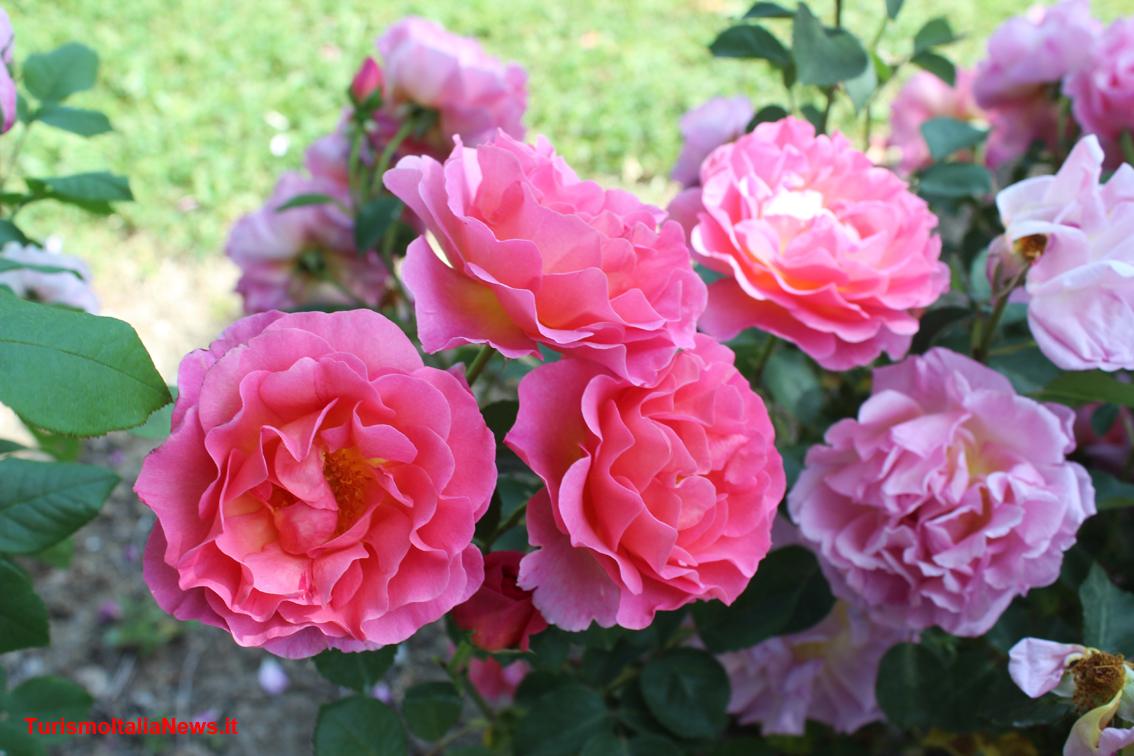 Il giardino delle cento rose nel cuore dell umbria la - Giardino con rose ...