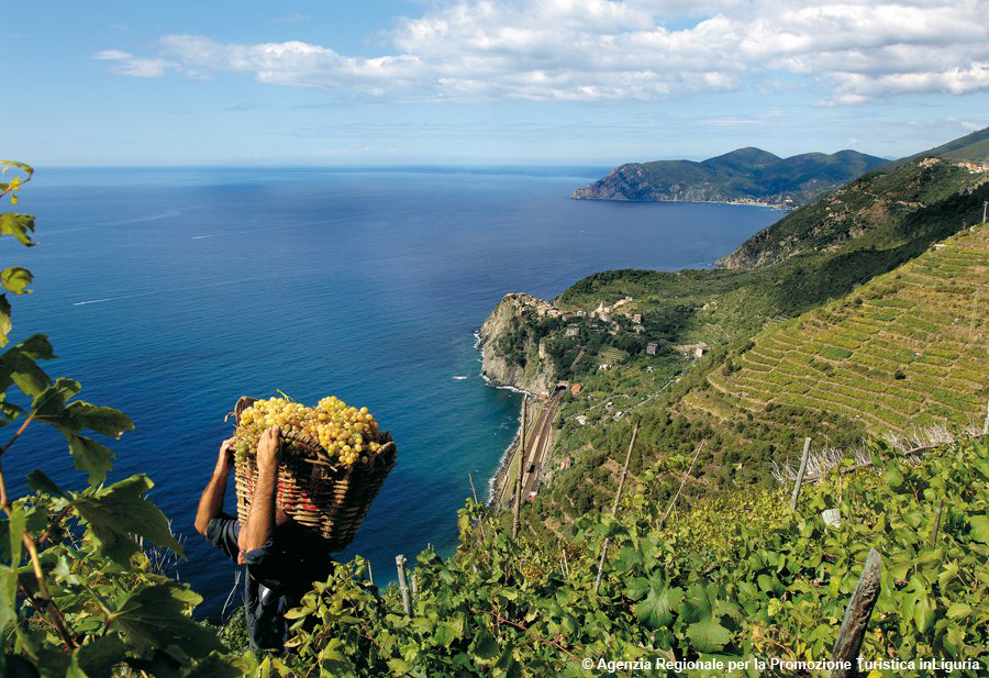 http://www.turismoitalianews.it/images/stories/liguria/Vigneti02_Liguria.jpg