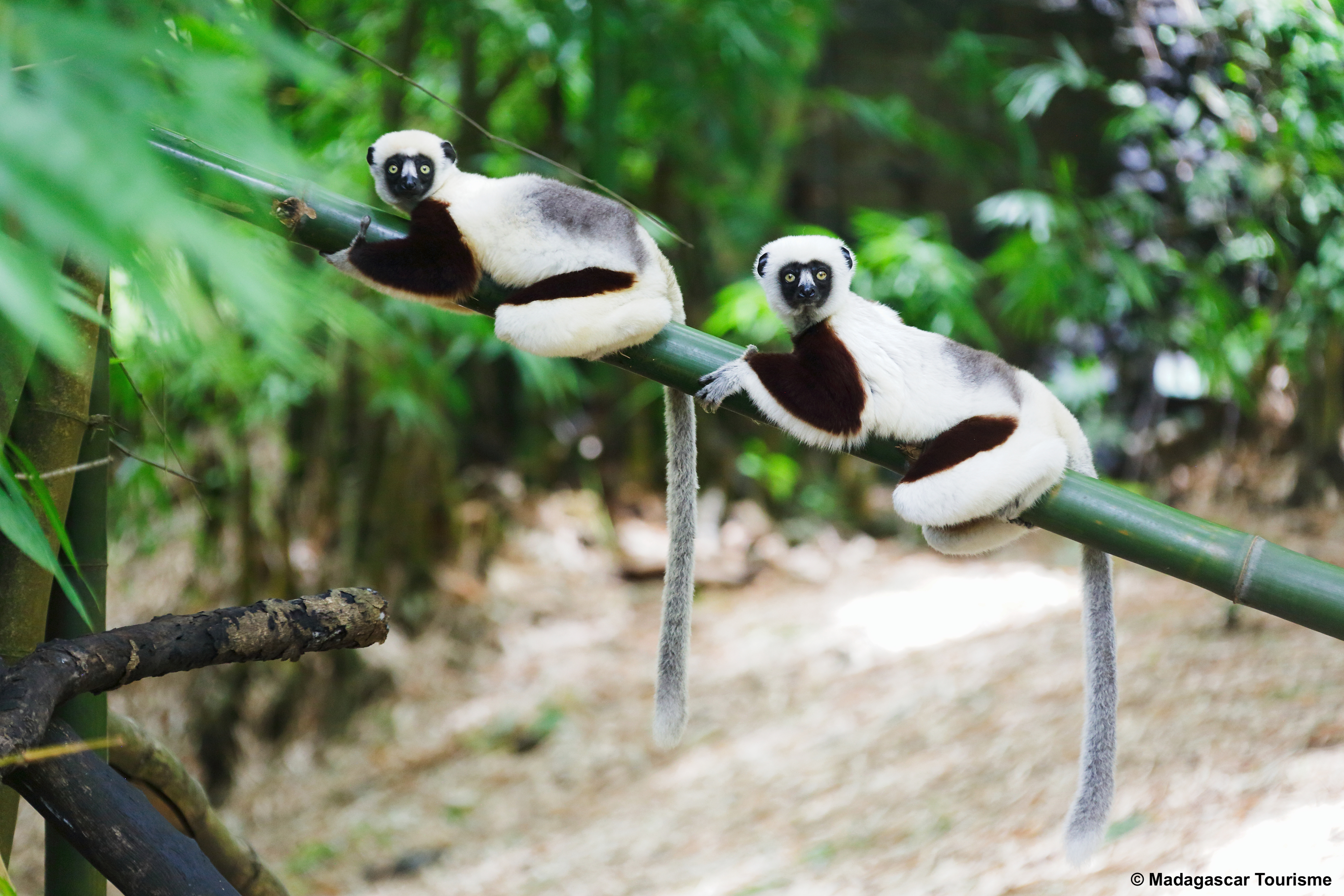 http://www.turismoitalianews.it/images/stories/madagascar/NosyBe07.jpg