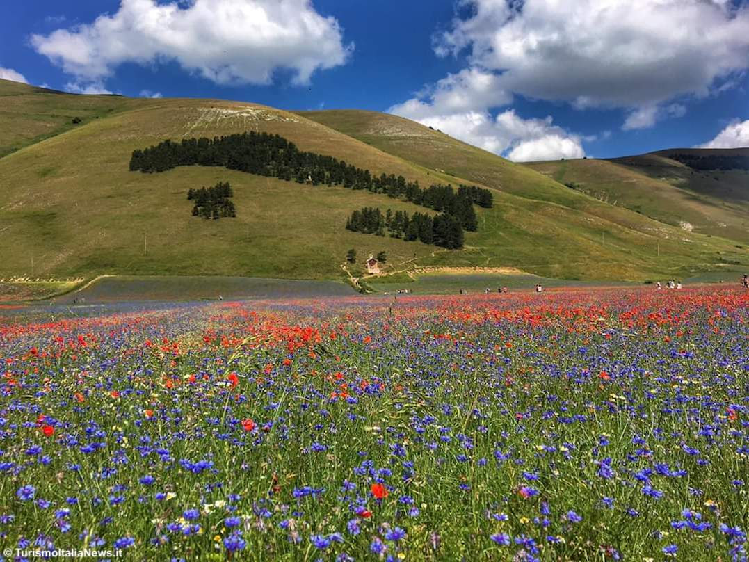 http://www.turismoitalianews.it/images/stories/umbria/CastelluccioBoscoItalia01.jpg