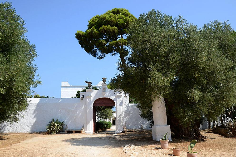 PugliaExperience tra vigneti e uliveti per degustare vini e raccogliere le olive, l'idea di Palazzo Rodio